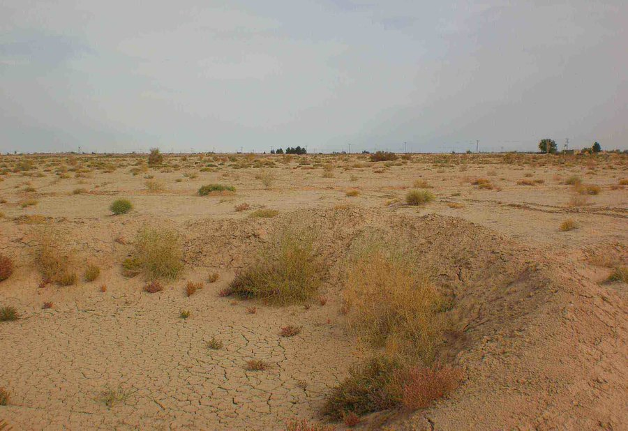 وسعت اراضی بیابانی شهرستان آران و بیدگل ۳۸۴ هزار هکتار است