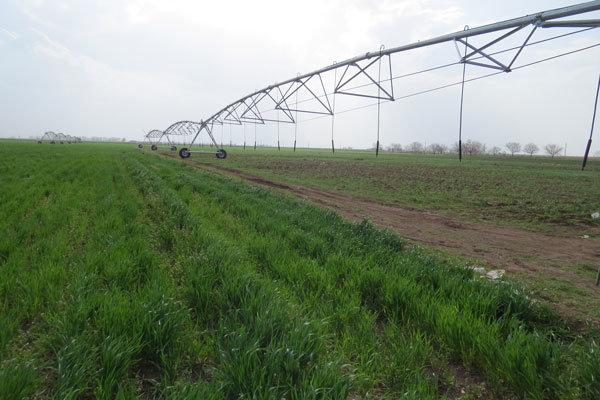 اجرای طرح الگوی کشت راهکاری مناسب برای مقابله با بحران کمبود آب بخش کشاورزی