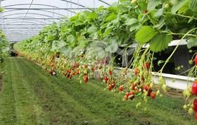محصولات گلخانهای راهکار مقابله با کمآبی حوضه زایندهرود