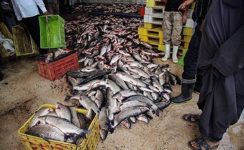 تعطیلی بازار ماهی فروشان بندرعباس/اجرای دقیق فاصله گذاری اجتماعی در یزد