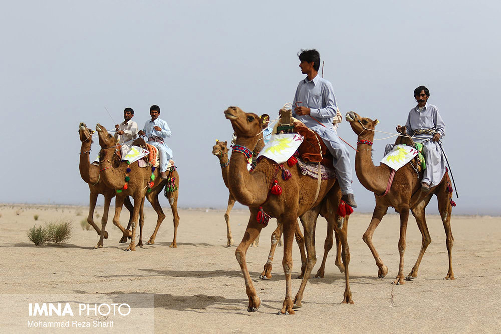Iran's 7th round of camel riding competition