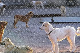 توضیح مدیر منطقه دو شهرداری در خصوص سگ های ولگرد شهرک پرتو