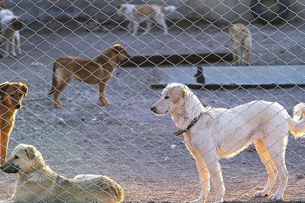 زنده گیری ۱۱۰ سگ بلاصاحب در جنوب غرب تبریز