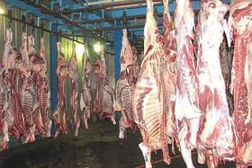 ۲۵ درصد گوشت قرمز استان اصفهان توسط عشایر تامین می شود