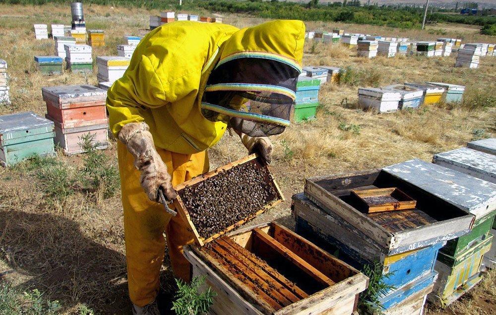 وجود ۸۰۰ هزار کلنی زنبور عسل در استان اصفهان