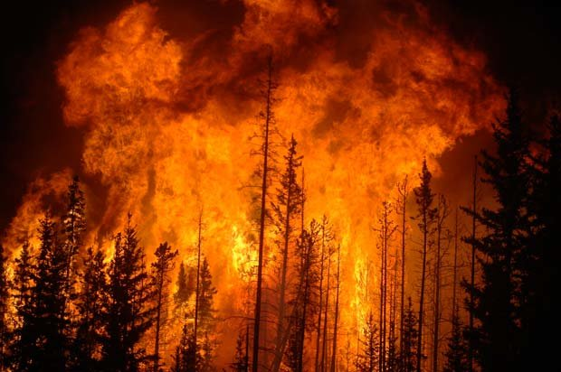 علت اصلی آتشسوزی جنگلها و مراتع چیست؟