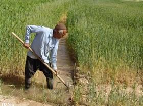 نجابت کشاورزان جنوب استان را با بی توجهی جواب ندهید
