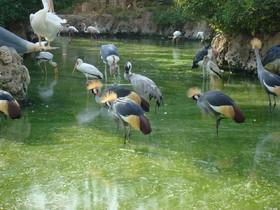Rare birds to multiple in Isfahan Bird Garden