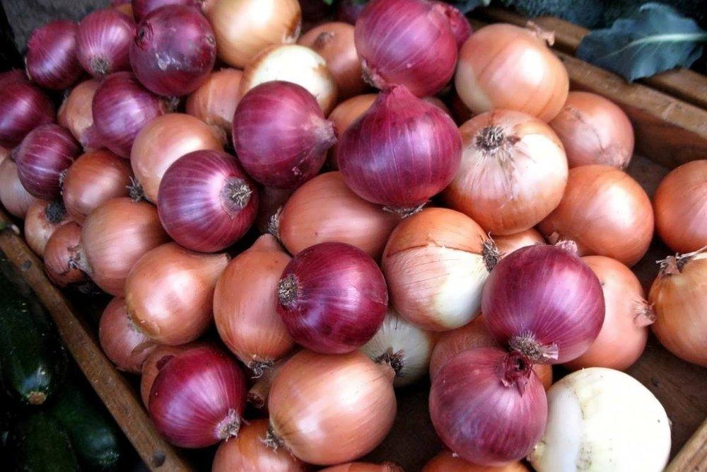 خرید تضمینی ۶۹ هزار تن پیاز از کشاورزان