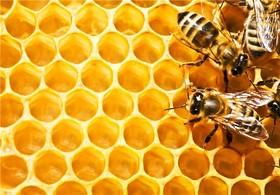 ایران، سومین تولید کننده عسل دنیاست