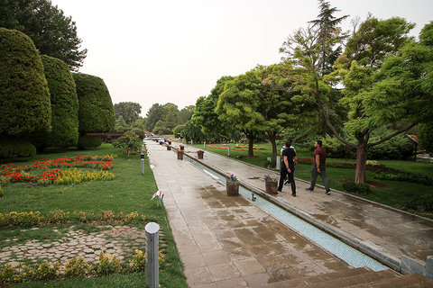 تنشهای پیش روی درختان فضای سبز شهری اصفهان/ راهکارها چیست؟
