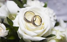 عوامل فرهنگی علت عمده کاهش ازدواج در تیران و کرون است