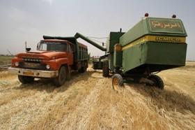 توزیع ۱۳۵ تن بذرگواهی شده گندم وجو بین کشاورزان دهاقانی