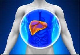 میزان شیوع کبد چرب غیر الکلی در کشور ۴۰ درصد است/۹۰ درصد افراد چاق مستعد ابتلا به کبد چرب