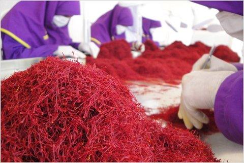 زعفران مانعی در برابر از بین رفتن فولیکولهای تخمدان