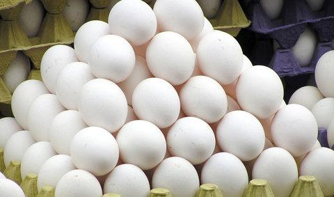 ۱۴ هزار تن تخم مرغ از ابتدای سال صادر شد
