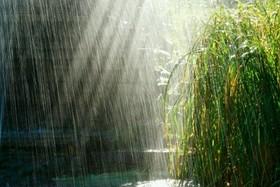 حجم بارشهای کشور ۵ درصد کاهش یافت/۱۵۹ میلیمتر، میزان بارش فلات مرکزی