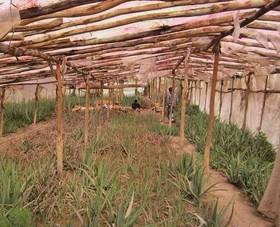 ۳۲ پروژه گلخانهای آماده بهره برداری است