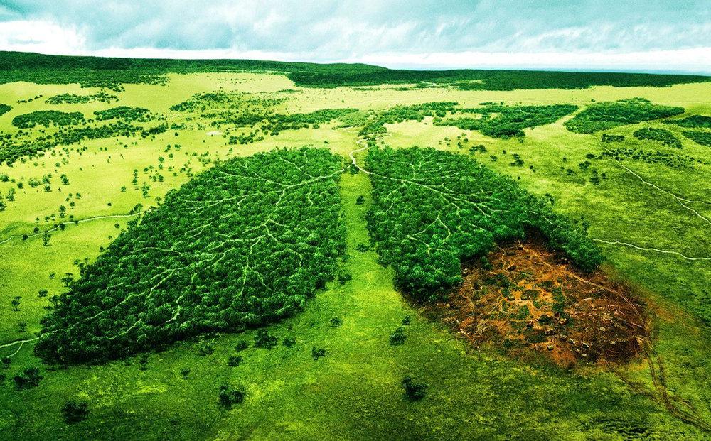 شهروندان چقدر در برابر محیط زیست احساس مسئولیت میکنند؟