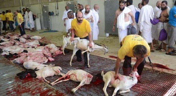 ۷۰ ناظر شرعی در کشتارگاه های اصفهان فعالیت می کنند