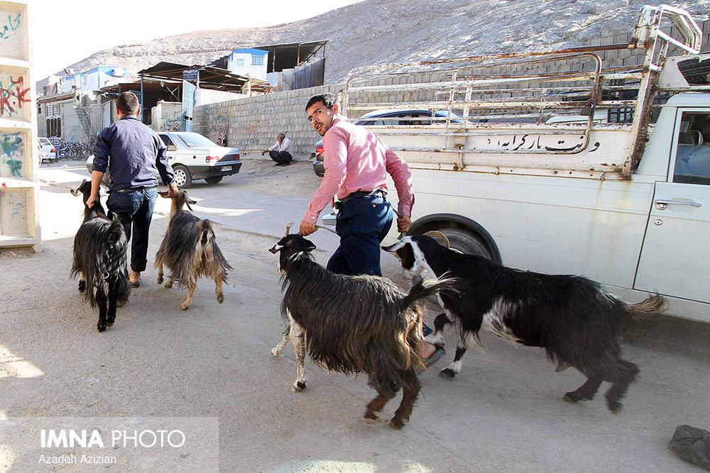 ممنوعیت فروش دام در رشت/احداث پارک مهارتهای شغلی در یزد