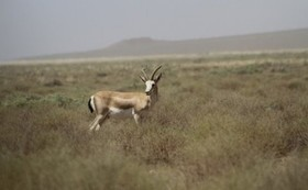 Day-long eco tours in Mouteh wildlife shelter/ Isfahan