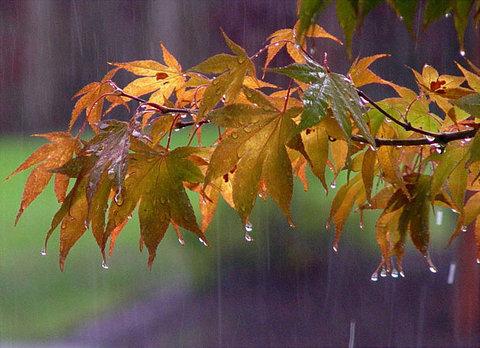 وضعیت بارندگی در پاییز ۹۸/ پیش بینی بارشهای فراتر از نرمال در شمال غرب کشور