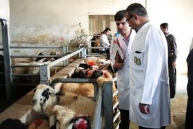 حضور دامپزشکان در کشتارگاه، تضمین کننده سلامت افراد/ساماندهی آموزشی؛ دغدغه جامعه دامپزشکی