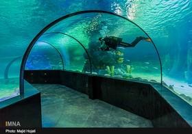 Isfahan Najvan aquarium offers discount for Sunday visits