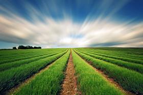 اجرای طرح کاداستر اراضی کشاورزی برای نخستین بار در دهاقان