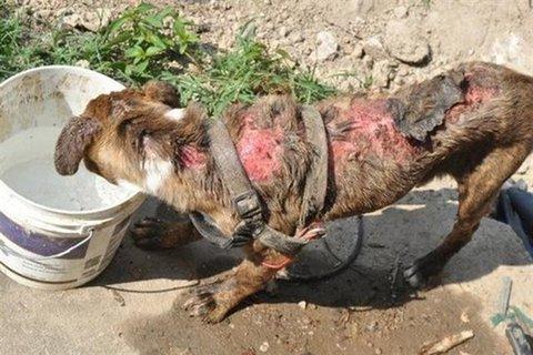 تاکنون هیچ مورد حیوان آزاری گزارش نشده است