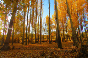 پاییز هزار رنگ سمیرم...