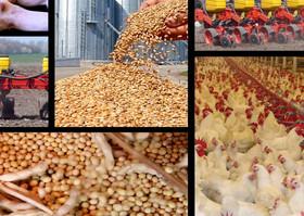 ساماندهی بازار عرضه نهادههای کشاورزی در شهرضا