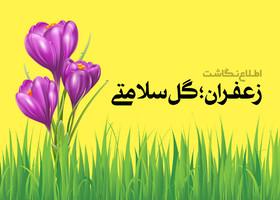 زعفـران؛ گل سلامتی