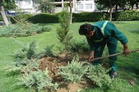 کاشت اصله درخت