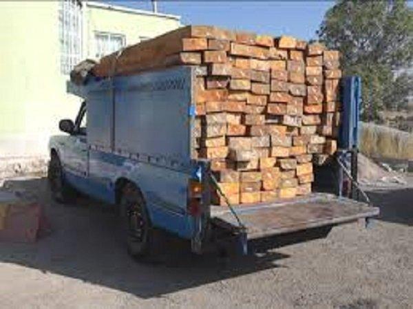 کشف ۹ تن چوب قاچاق در آستارا