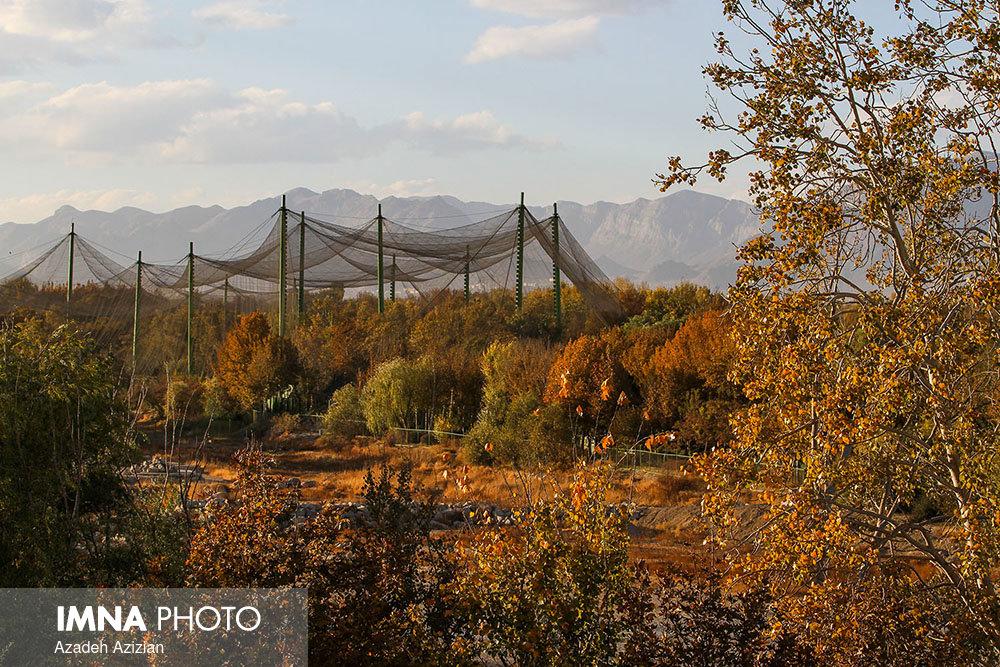 پاییز ناژوان سوار بر تله سیژ