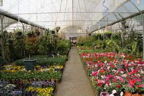 جشنواره گل و گیاه، ماهی های زینتی و مشاغل خانگی