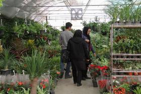 سرانه مصرف گل در ایران ۵ و در اروپا ۵۰ شاخه است