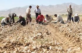 فریدن و سونامی کارگران فصلی