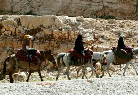Nomad tours to be held for foreign tourists
