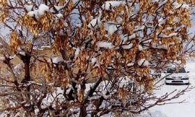 گیسوان آذر سپید شد/ بارش 4 سانتی متری برف در فریدن+تصاویر
