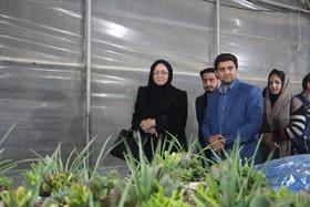 بازار گل و گیاه اصفهان، راهکارهای نگهداری از گل ها را آموزش می دهد