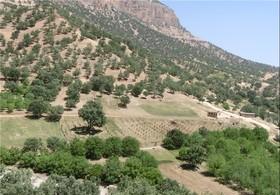 اجرای طرح جنگل کاری مشارکتی در روستای گنجه فریدن