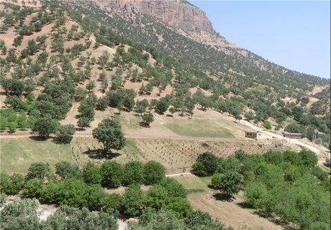 ۶۰۰ هکتار جنگل کاری گسترده در کرج انجام شده است
