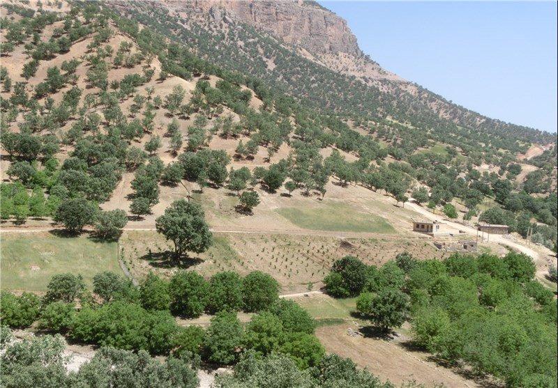 ۱۲۵ هزار اصله نهال جنگلی در اراضی استان اصفهان کاشته شد