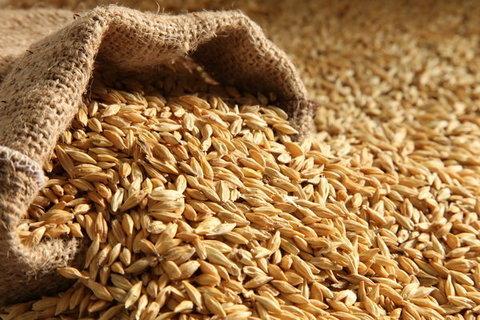 بیش از ۷ میلیون گندم از کشاورزان خریداری شد