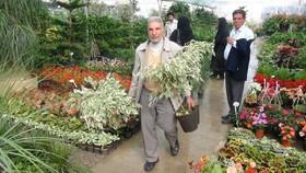 بازار گل و گیاه شهرداری اصفهان نیاز بازار گل جنوب کشور را تامین می کند