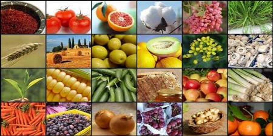 محصولات کشاورزی ۱۶.۶ درصد صادرات غیرنفتی کشور را بخود اختصاص داد