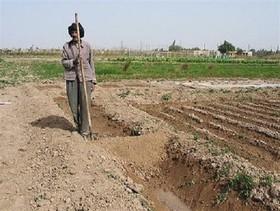 کشاورزان در اولویت دریافت تسهیلات اشتغالزایی روستایی